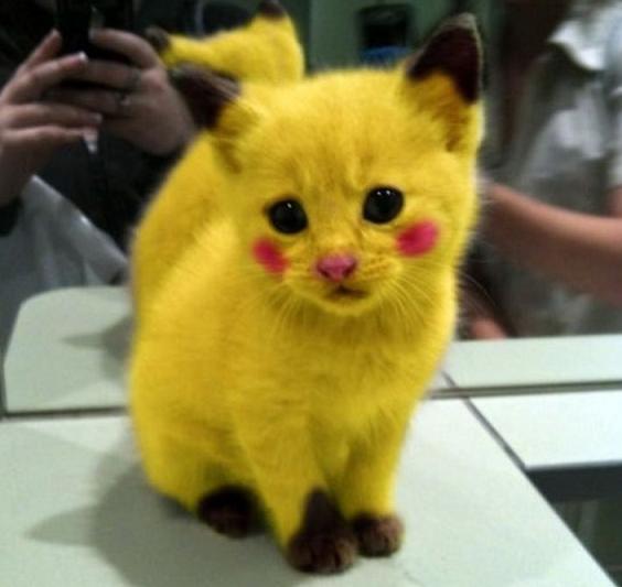 Le chat pikatchu