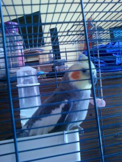 Voila mon oiseau