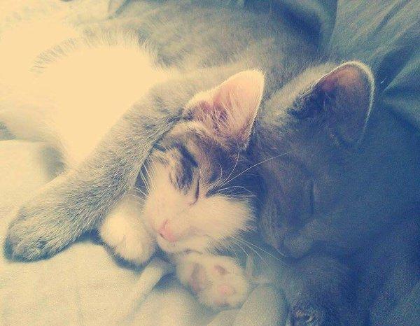mes bébés chat :3