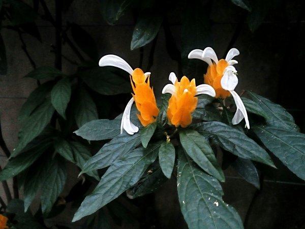 Photo , Fleur.