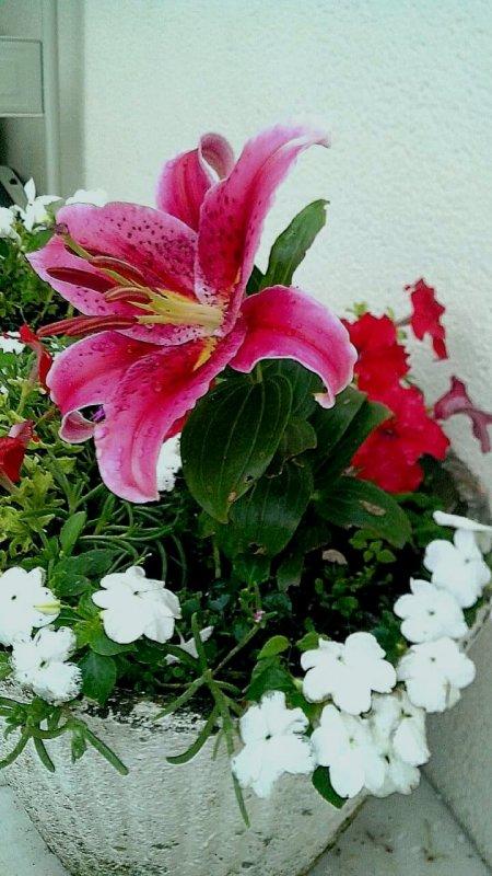 Fleur :-) J'adore cellà ...