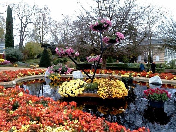 Arbres fleuri avec ses belles couleurs , sur fontaine , couleurs d'Automne...