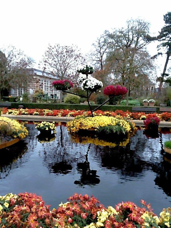 Arbres fleuri avec ses belles couleurs , sur fontaine , couleurs d'Automne... plantes.