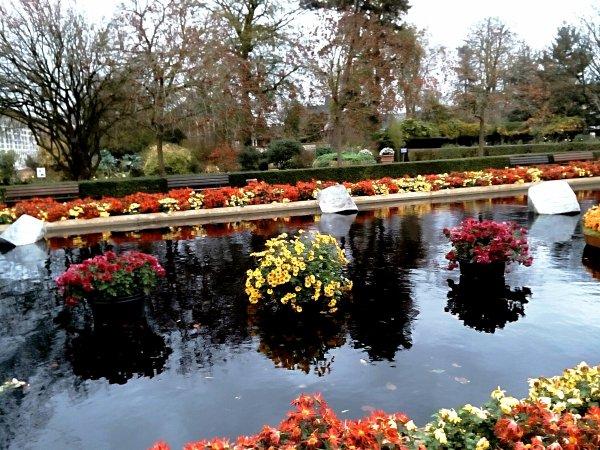 Petites plantes , sur fontaine