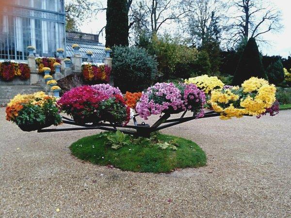 Petit arbres avec ses belles plantes et fleurs ...