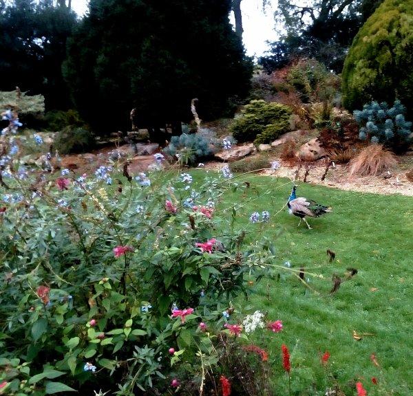 Une petite volaille haha dans le jardin des plantes...