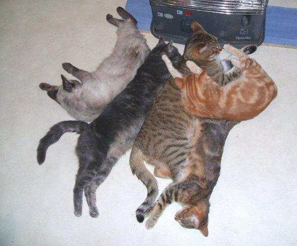 mes chats en pleine action!!!