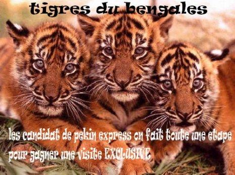 une etape sous le signe des tigres