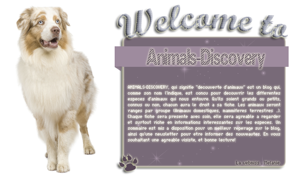 Bienvenue sur Animals-Discovery ..