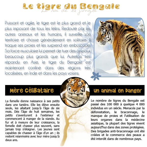 Catégorie : Mammifères terrestres, Animal n°1 : Le tigre du Bengale.