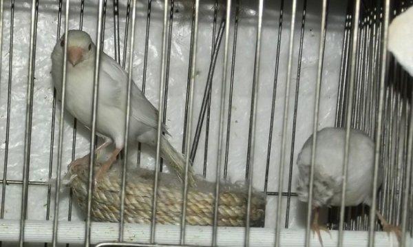La deuxième ligne dans les incubateurs oiseaux d'alimentation artificielle