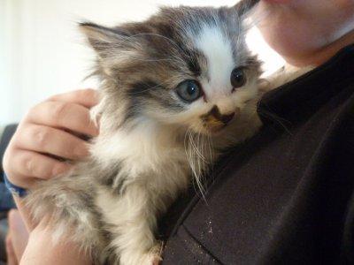 voici notre  nouveau chaton plus cas trouver un nom mdr