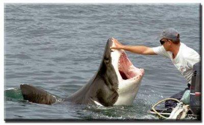 à tous les amoureux des Requins...