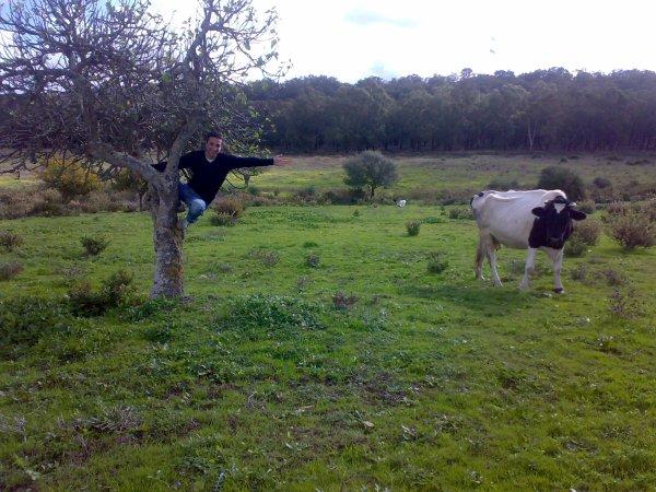 ma grande vache