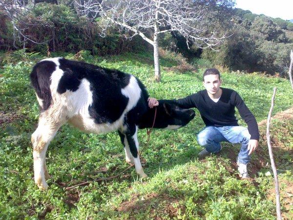 ma ptite vache
