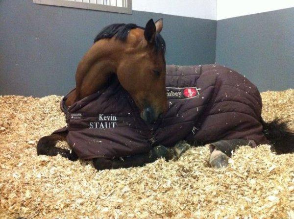 Quismy des Vaux qui fait une sieste