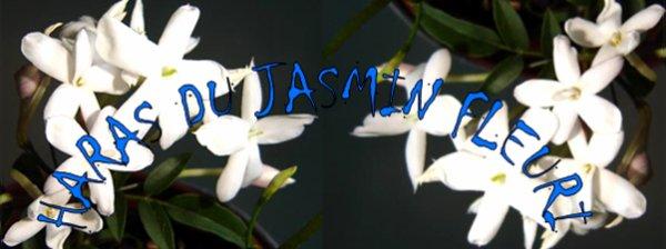 Le Haras du Jasmin Fleuri vous salue !
