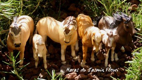Cavalerie : PARTIE 5 : Grands Poneys