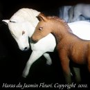 Photo de figurines-de-chevaux