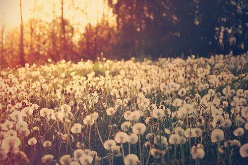 « L'absence diminue les médiocres passions, et augmente les grandes, comme le vent éteint les bougies, et allume le feu. » François de La Rochefoucauld