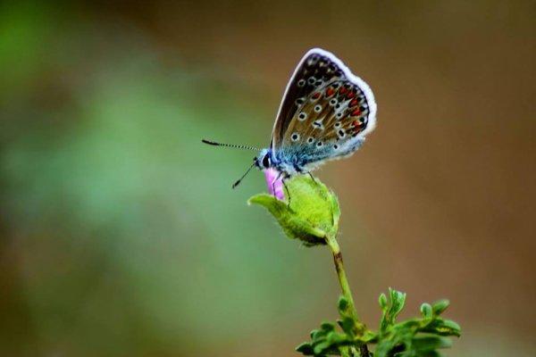 beautée de la nature