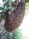 Photo de apiculteur52