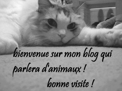 bienvenue sur mon blog animaux!