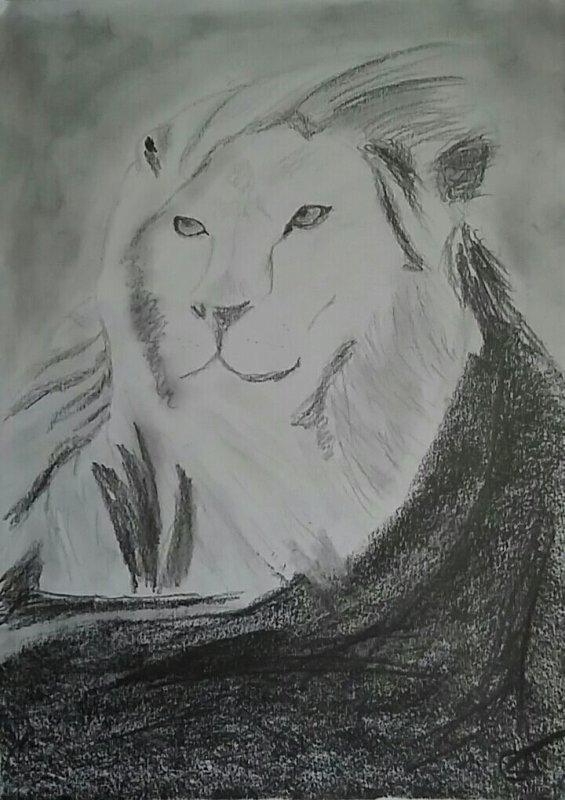 Lion ♡.♡