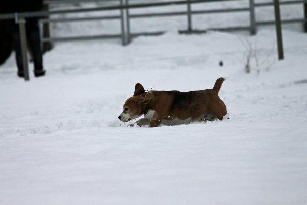 Dans la neige :)