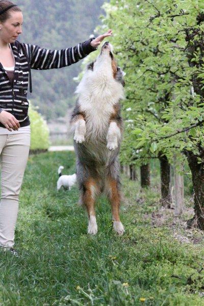 26.04.13 avec les chiens d'Angélique
