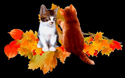 Bonne journée d'automne...