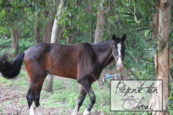 Présente ton cheval !