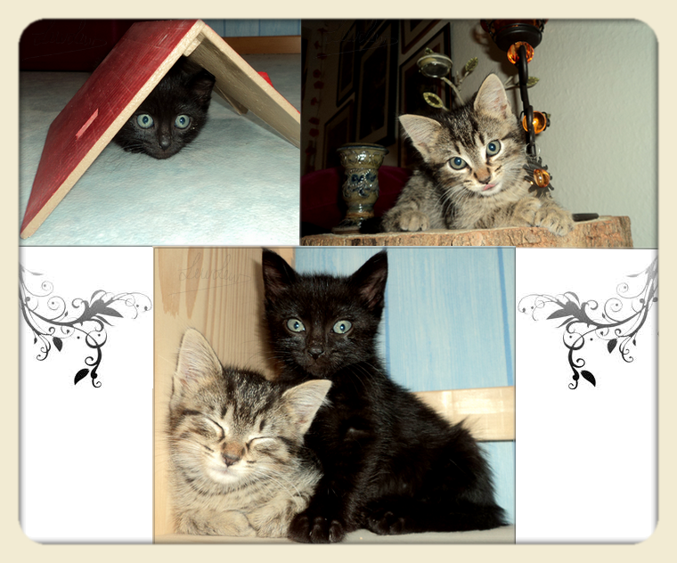 Les chatons ♥♥♥♥♥♥♥♥♥♥♥♥♥♥♥