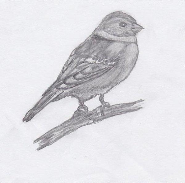 Mon petit oiseau