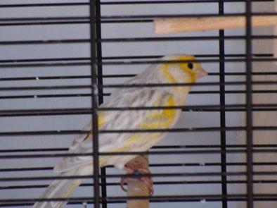 Yellow ( sa tête )