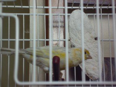 Yellow dans la maison