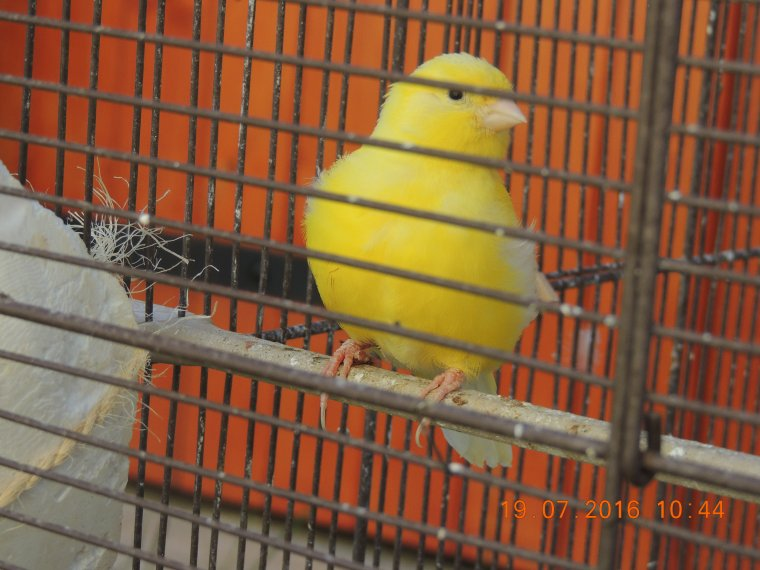 2 jeunes lipo jaune intensif