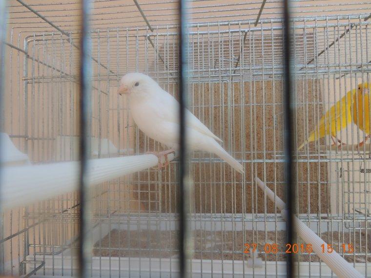 Oiseaux pour le régional 2016
