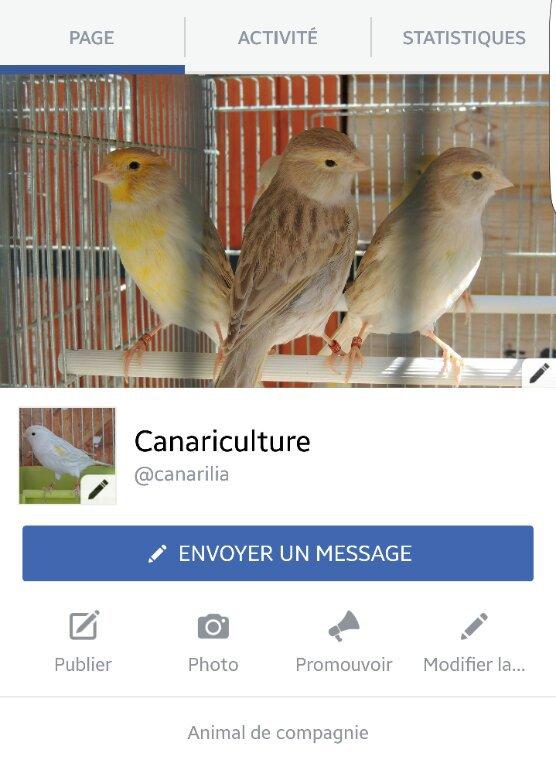 MA PAGE FACEBOOK : Canariculture