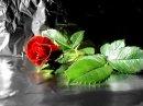 Photo de zouly808