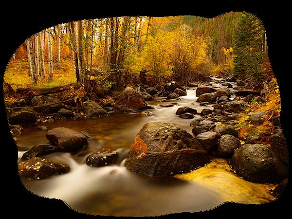 Automne.....L'automne est un second ressort ou chaque feuille est une fleur.