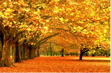 Octobre et ses couleurs