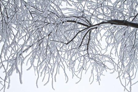 Période de froid