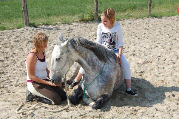 Ce cheval me fait rever - Rever de faire une fausse couche ...