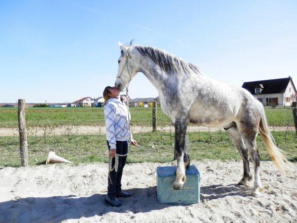 """Si je devais choisir entre tous mes amis, le meilleur, le plus fidèle, celui qui est toujours la pour moi, je choisirais mon cheval... """""""