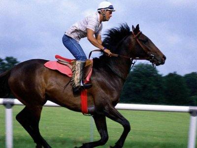"Officiel Sondage "" equitation """
