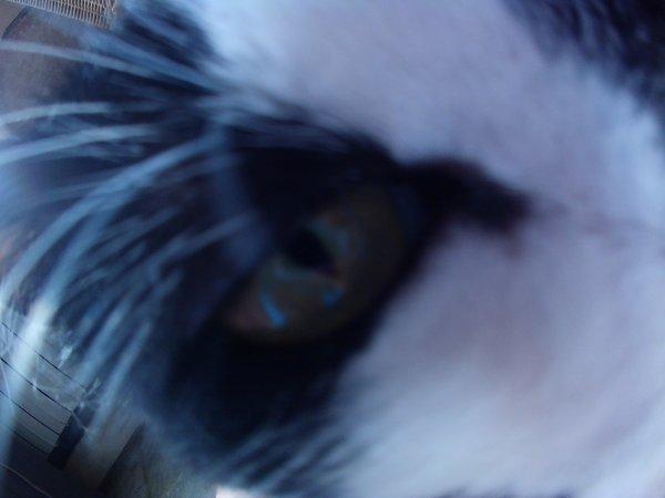 Un oeil de lynx ..... qui vien de se reveiller .