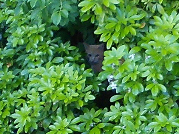 Cache cache ...........de chat !