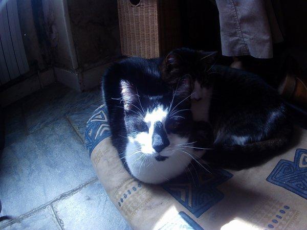 pss...la chatte noire et ba ... elle rentre par la fenetre ... de la maison