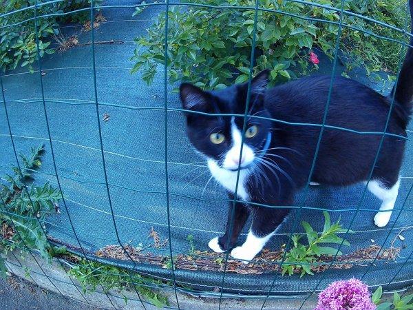 EH!!! toi tu connais la chatte noir ... non ... ok.